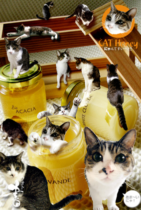 cat honey